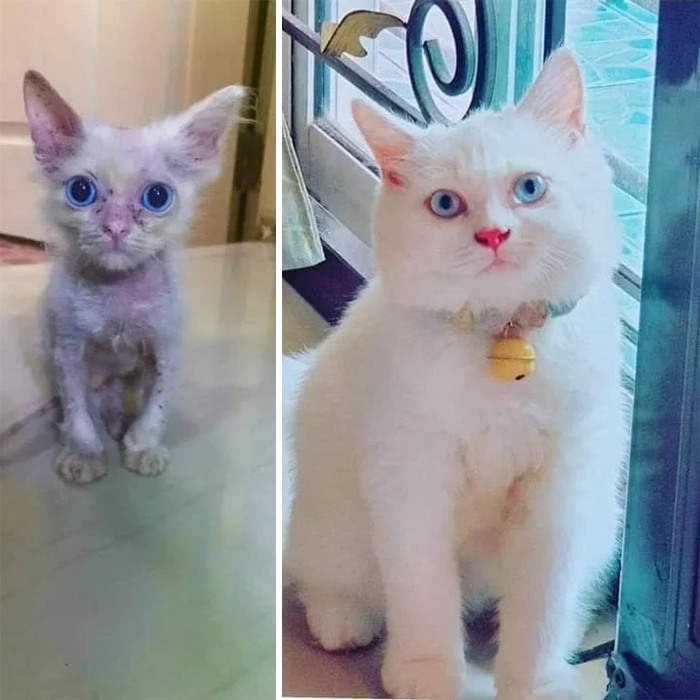 rescue kitty adopted transformation