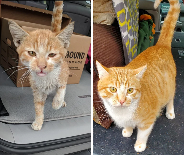 rescued cats before and after adoption