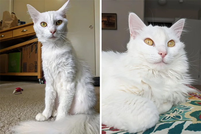 rescued cats before and after photos