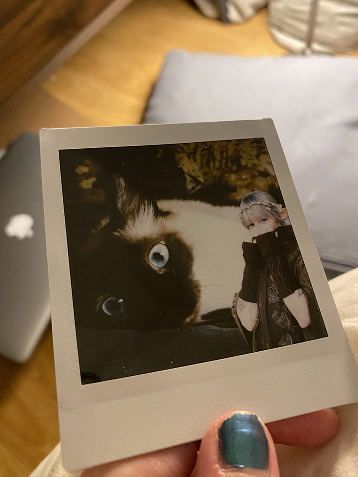 sapphire the fairy polaroid photo with cat