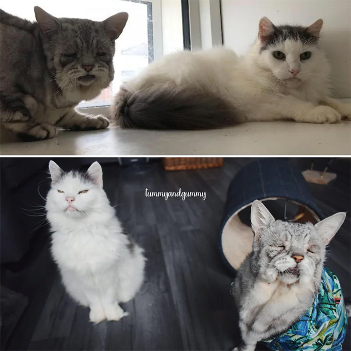 shelter kitties adopted as a bonded pair
