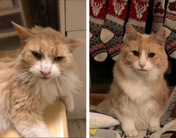 sickly shelter cats before and after adoption
