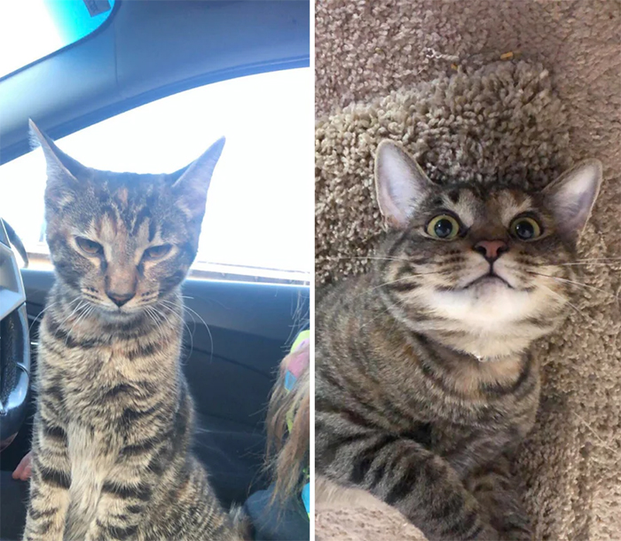 stray cats before and after adoption