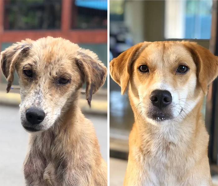 stray dog rescued then and now