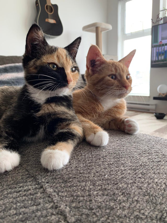 two adopted cats sitting on couch rescue pet photos