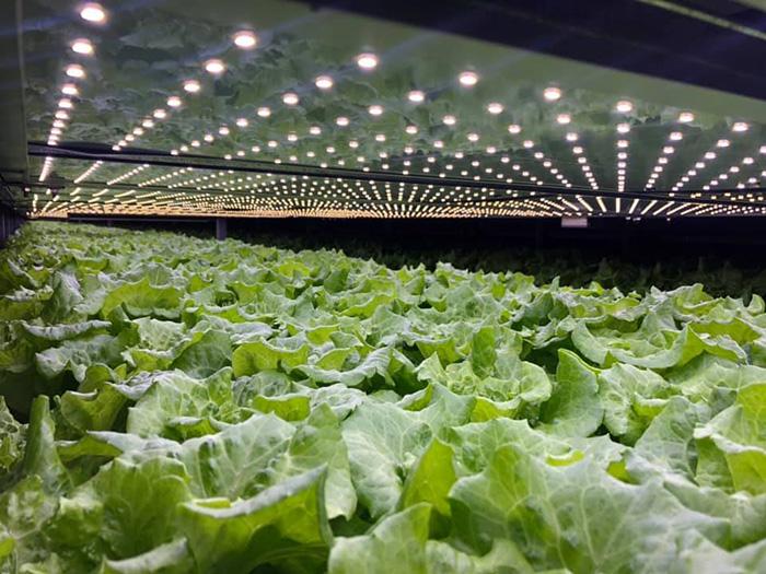 wind-powered vertical farm produce