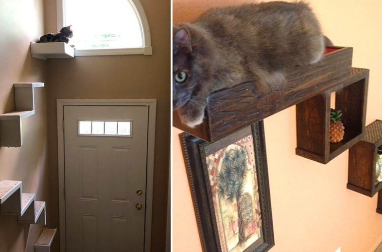 Floating Cat stairs
