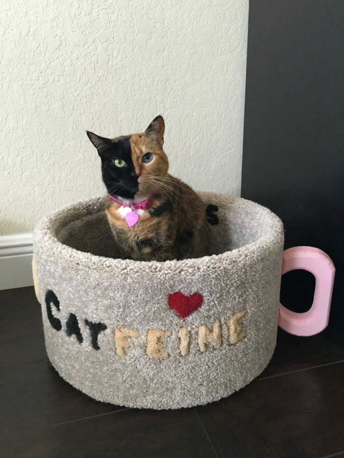 a bi-colored cat sits inside its pink handled catfeine coffee mug cat bed