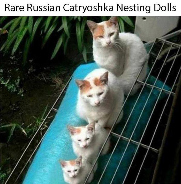 cat memes matryoshka dolls