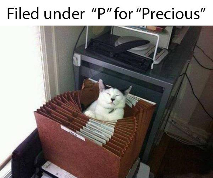 cat memes overlords filed kitty