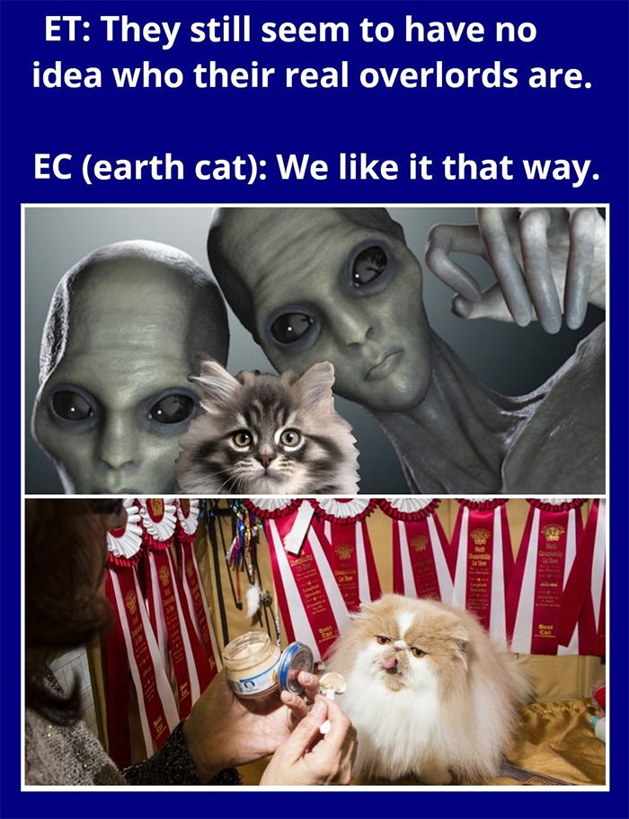cat memes overlords