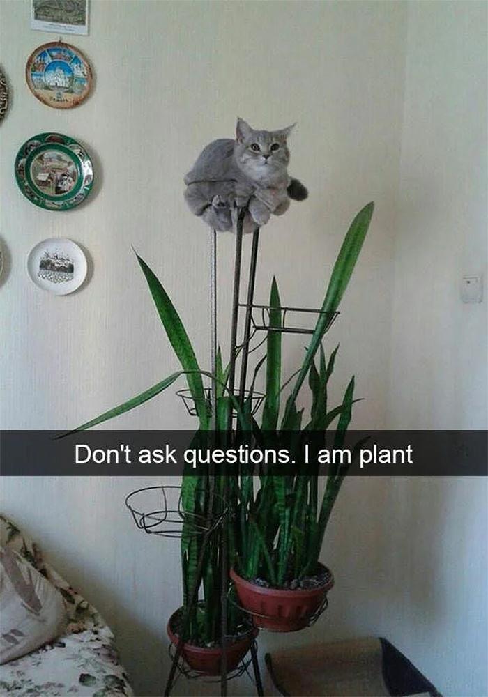 cat memes plant