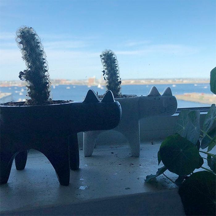 cat-shaped succulent vases