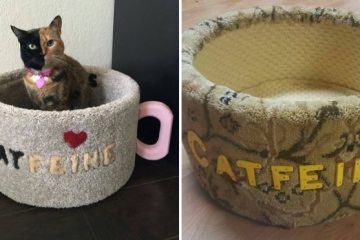 catfeine coffee mug cat bed