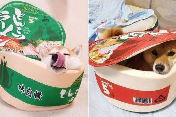 cup noodle pet bed