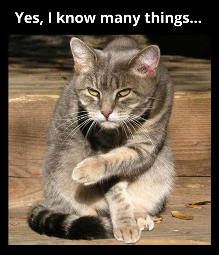 kitty knows many things