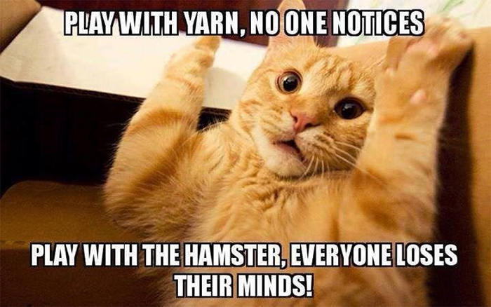 kitty play with hamster