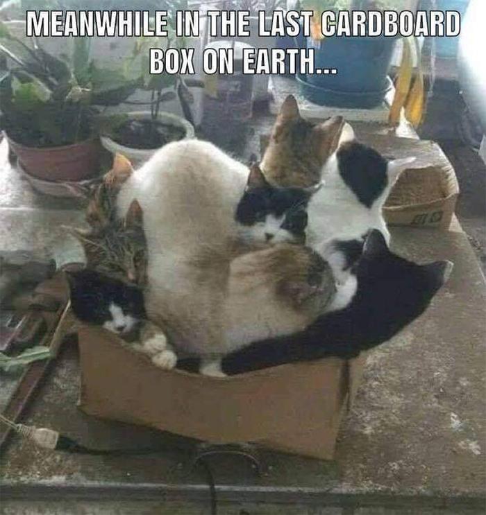 last cardboard box on earth