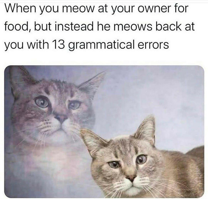 meow grammatical errors