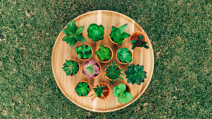 mini faux succulent plants