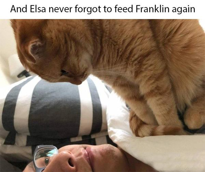 never forget to feed a kitty
