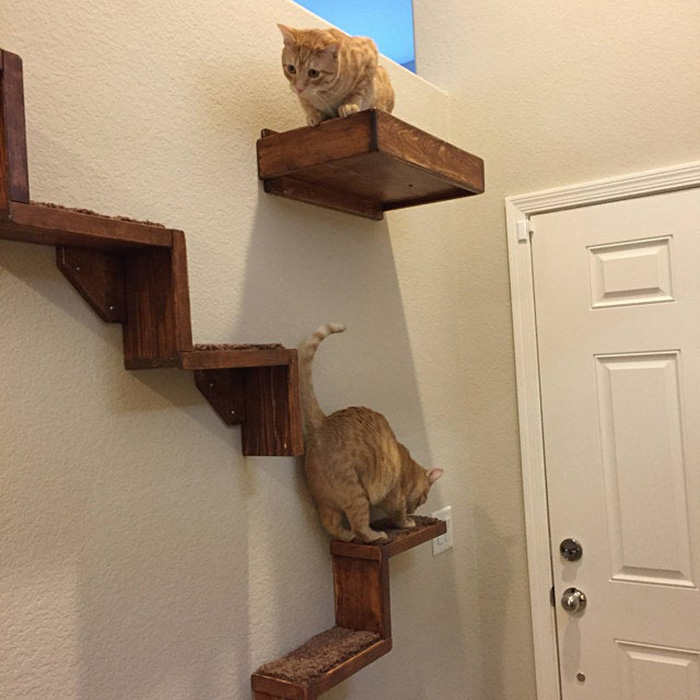 portesuelogoods floating cat stairs customer review erin