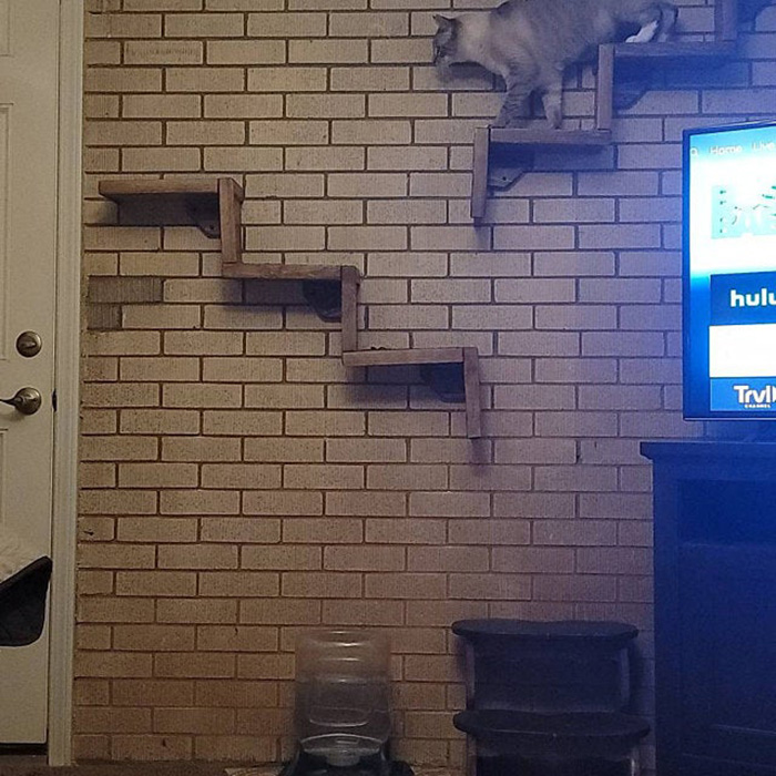 portesuelogoods floating cat stairs customer review molly palfenier