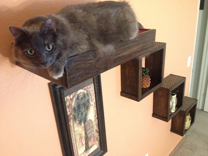 portesuelogoods floating cat stairs with block shelves set