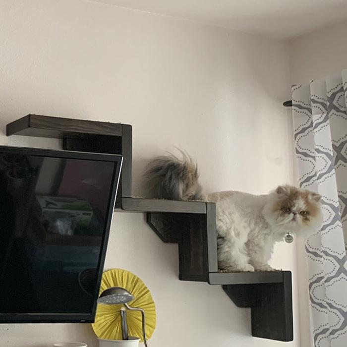 portesuelogoods wall-hanging feline perch customer review feelinfroggy77