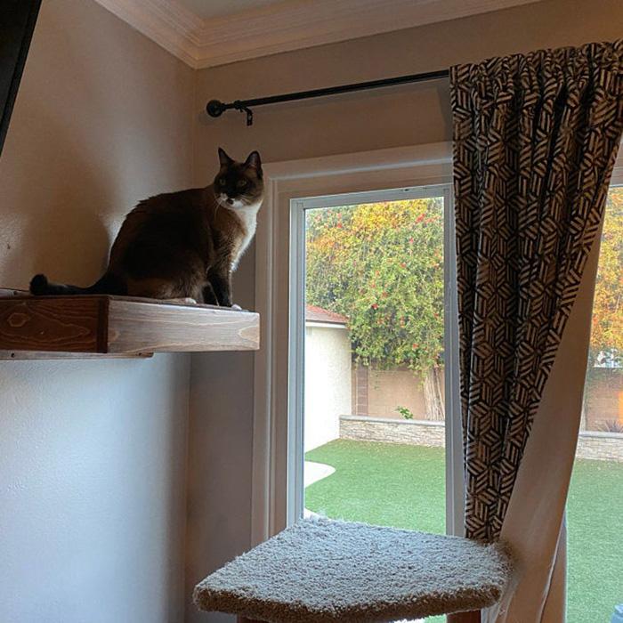 portesuelogoods wall-hanging feline perch customer review taleen altebarmakian