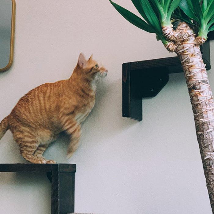 portesuelogoods wall-hanging feline perch customer review yareli jimenez