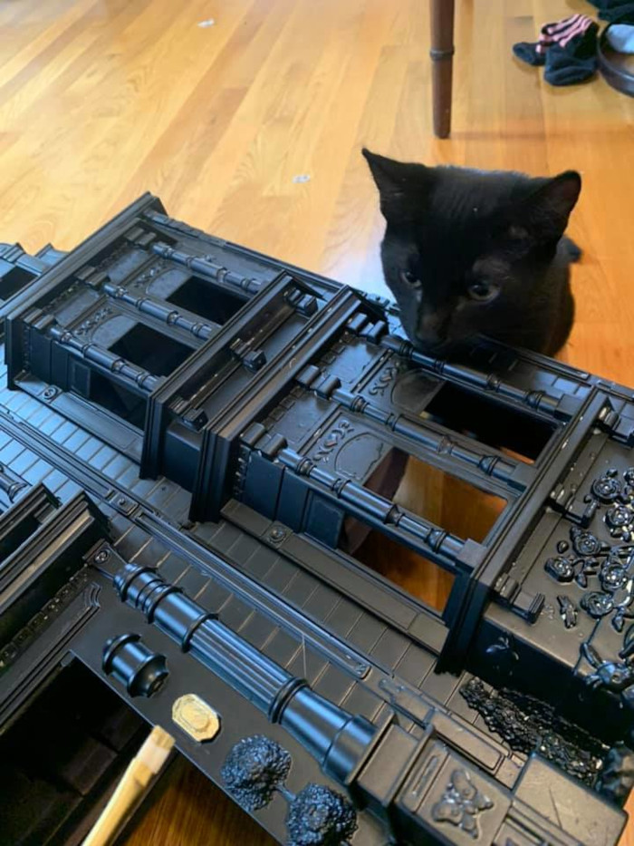 samantha's pet cat stares at his human's black dollhouse
