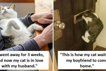 Possessive Pets