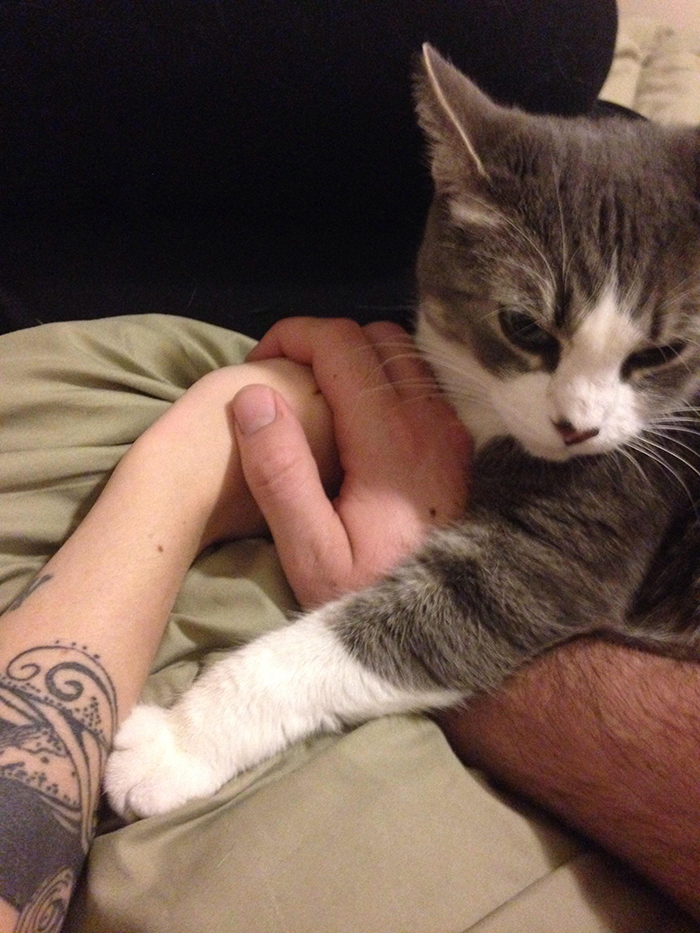 cat getting jealous of owner holding girlfriend's hand