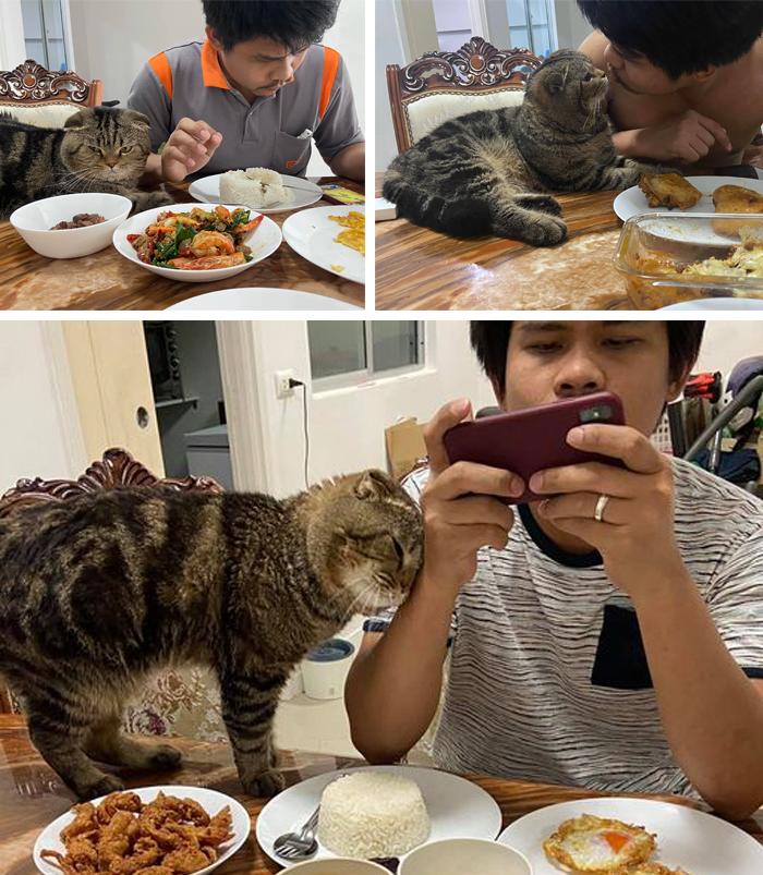 cat shamelessly stealing owner's husband