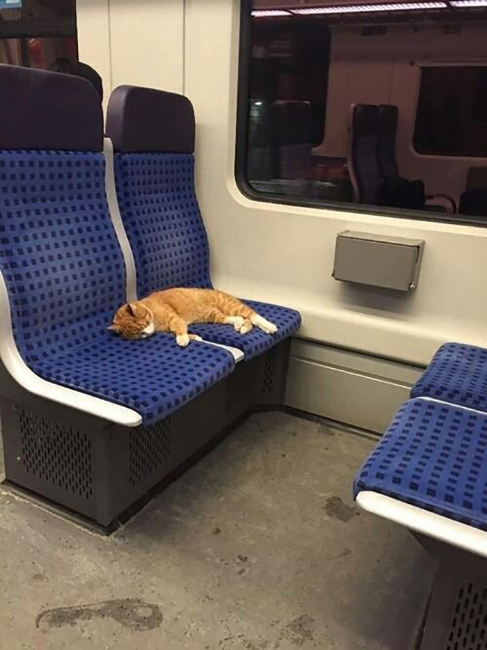 cat sleeping on train and occupying two seats
