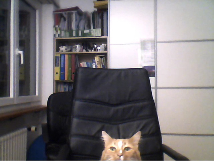 cat sneaking into owner's video call with boyfriend