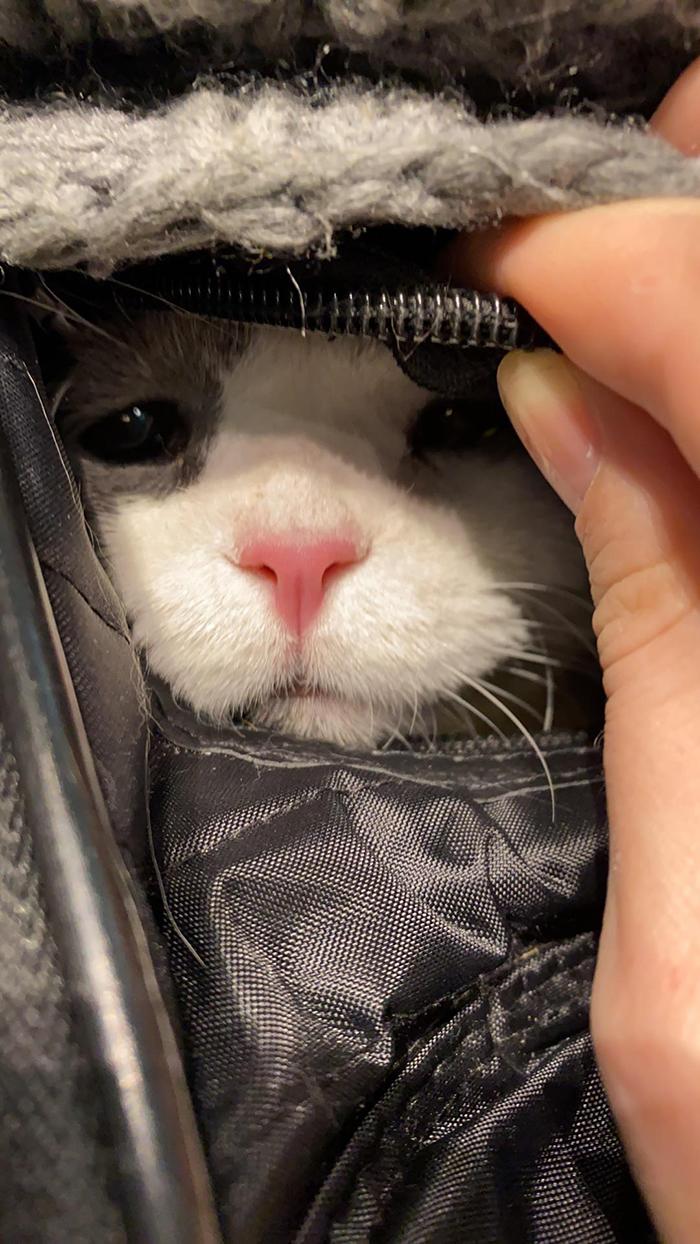 cat stressed from flight