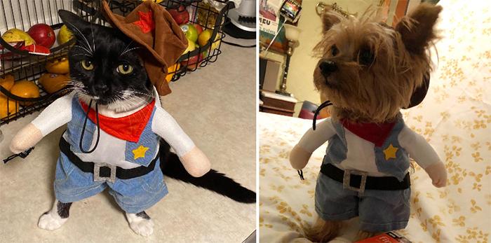 cowboy cat costume dog
