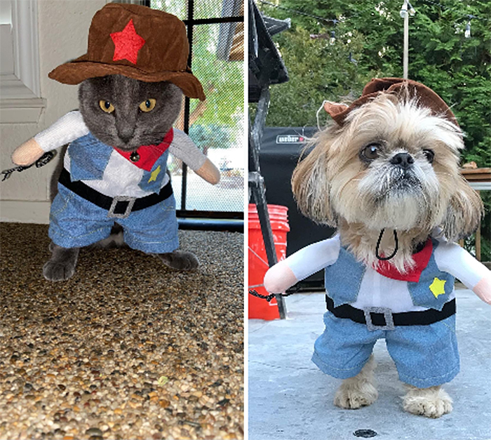 cute western style pet outfit