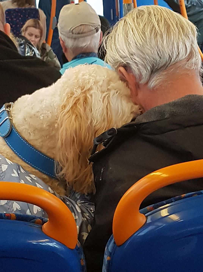 dog and owner sleeping while leaning against each other on bus
