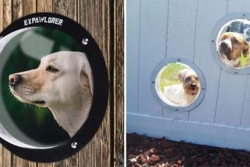 dog fence bubble window
