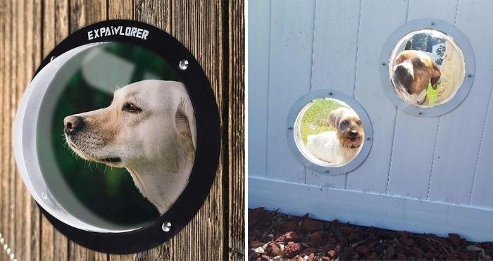 dog fence bubble window