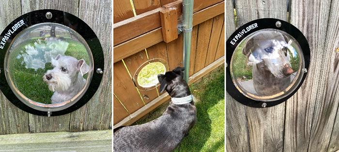 dog fence bubble window dome