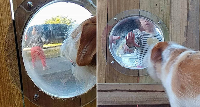 dog fence bubble window peek