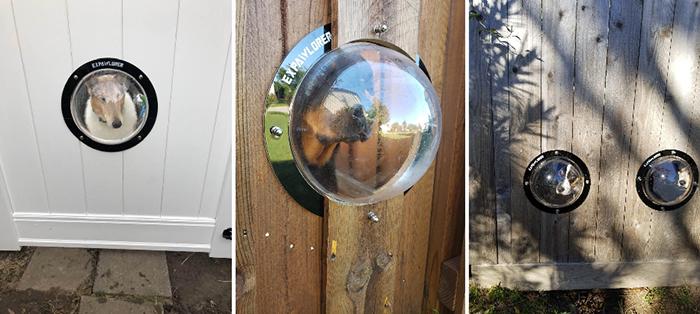 dog fence bubble window transparent