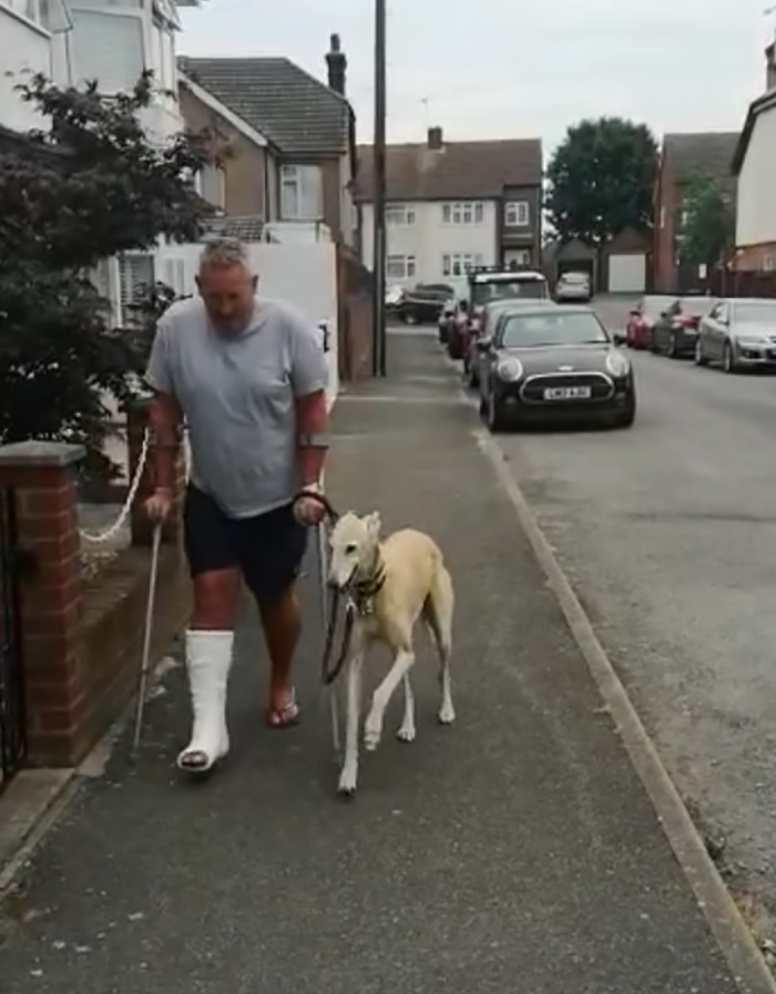 dog imitating limping injured owner