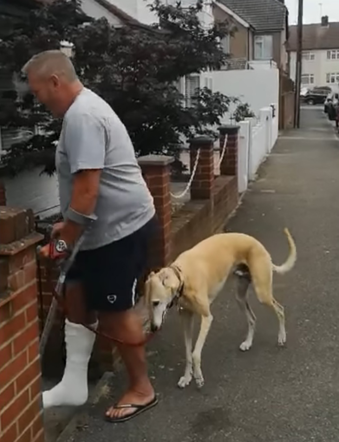 dog imitating limping owner