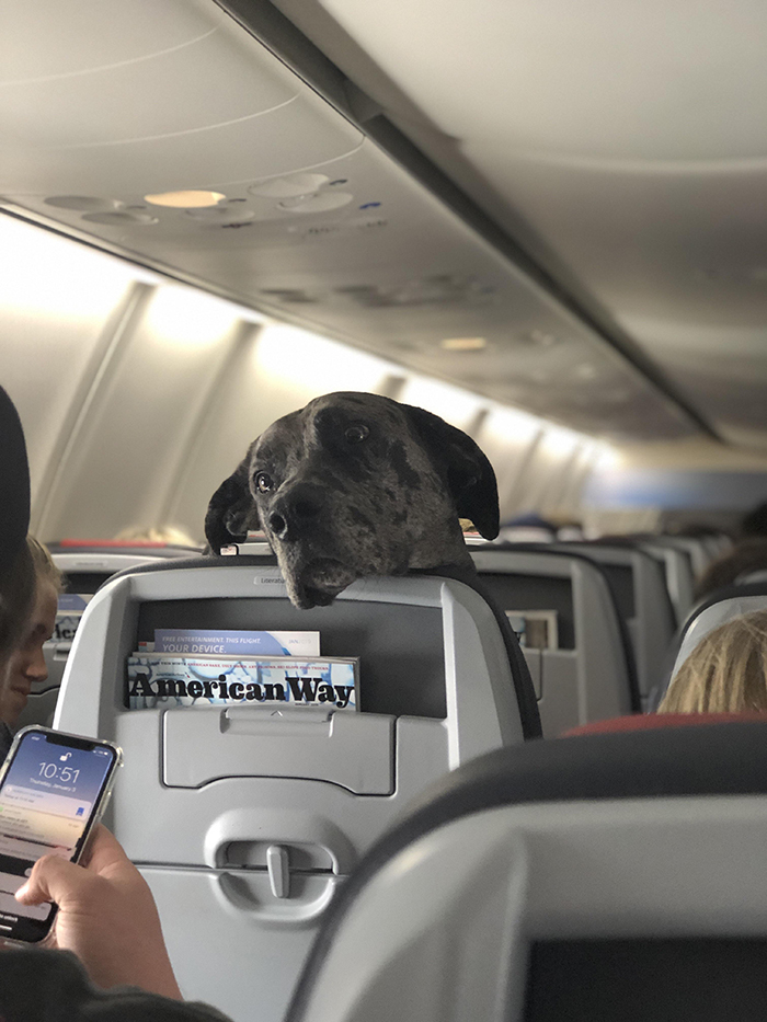 dog on plane staring at another passenger