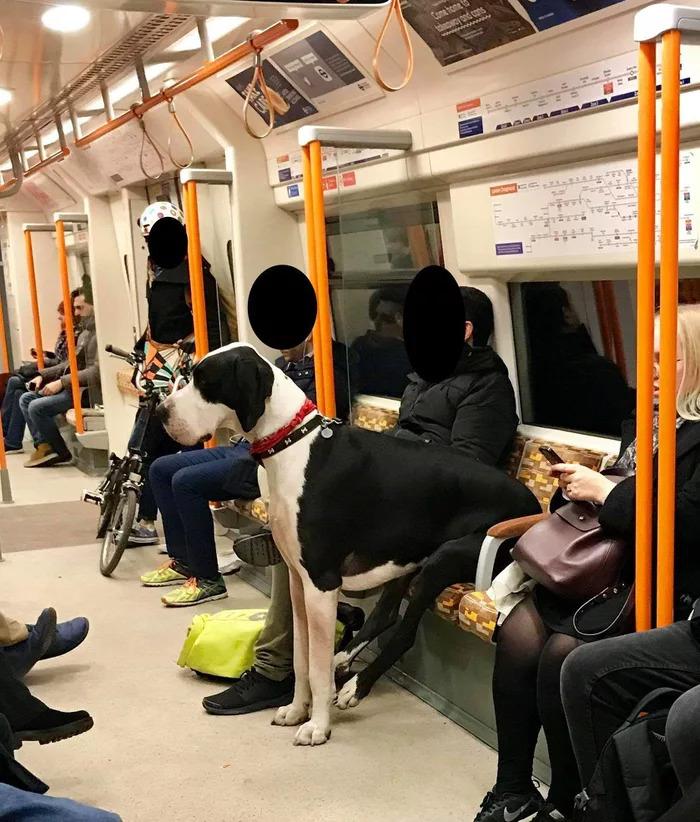 dog sitting on subway